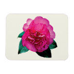 Dark Pink Camellia Dazzler Magnet