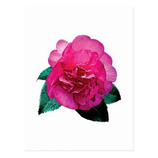 Dark Pink Camellia Dazzler Postcard