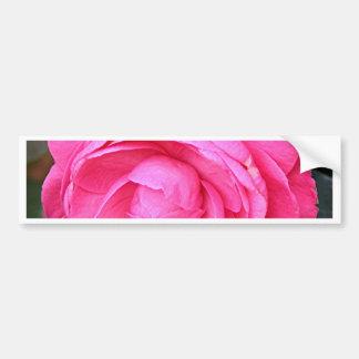 Dark pink camellia flower in bloom in garden bumper sticker