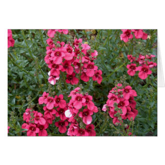 Dark Pink Diascia Card