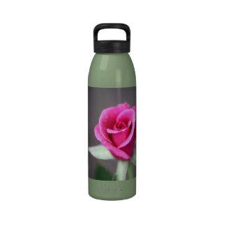 dark pink mini rose drinking bottles