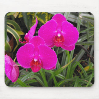 Dark Pink Orchids Mouse Pad