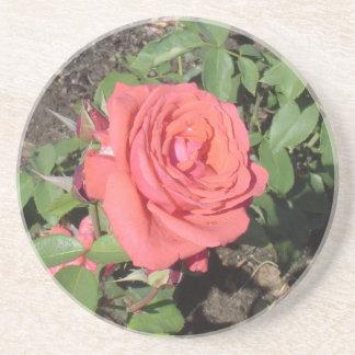 Dark Pink Rose Beverage Coaster
