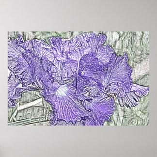 Dark purple and white bearded irises canvas print