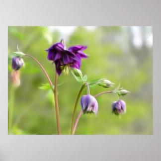 Dark Purple Columbine Print