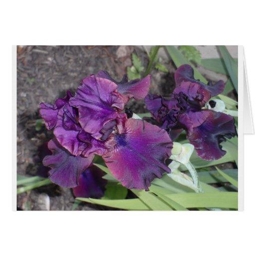dark purple iris card