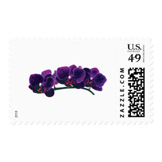 Dark Purple Phalaenopsis Orchids Postage