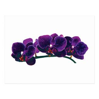 Dark Purple Phalaenopsis Orchids Postcard