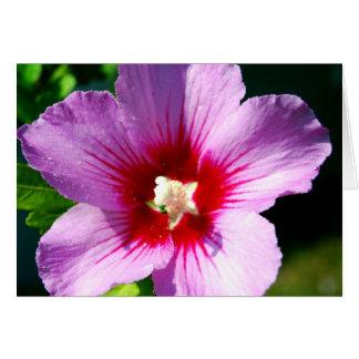 Dark purple Rose of Sharon Card