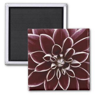 Dark red dahlia flower blossom magnets