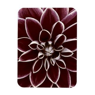 Dark red dahlia flower blossom vinyl magnets