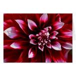 dark red dahlia greeting card