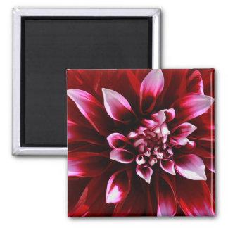 dark red dahlia fridge magnets