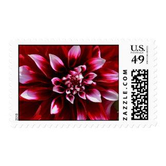dark red dahlia postage