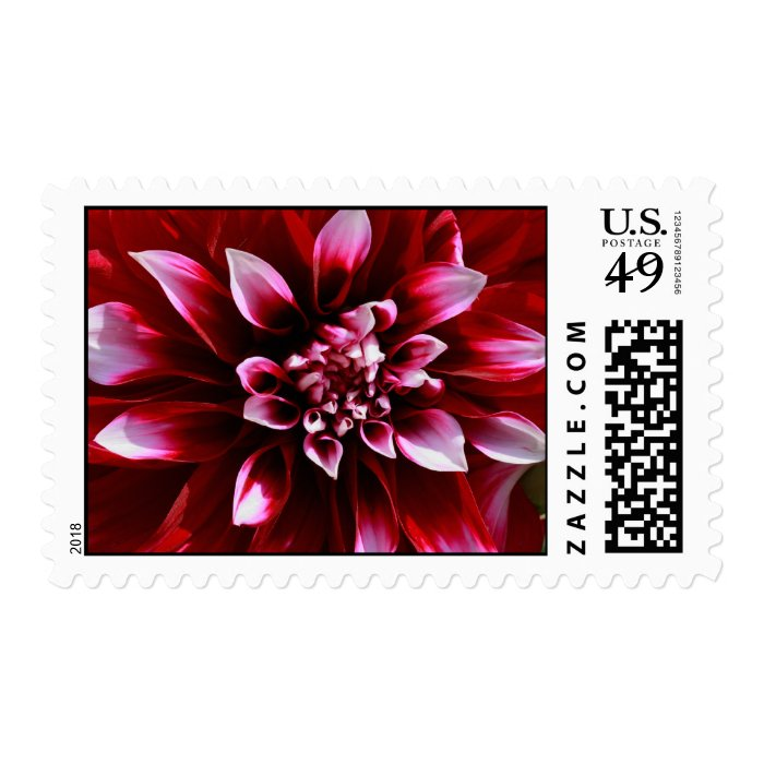 dark red dahlia postage stamp