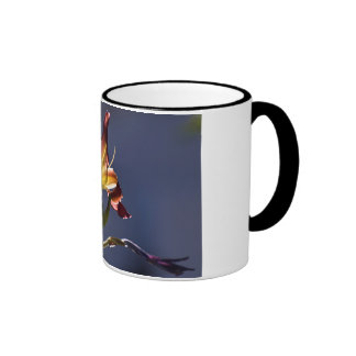 Dark Red Day Lily with Sun Shining Through Mugs