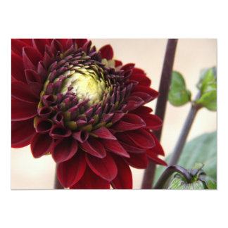 Dark Red Flower Card