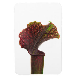 Dark Red Pitcher Plant Rectangular Photo Magnet