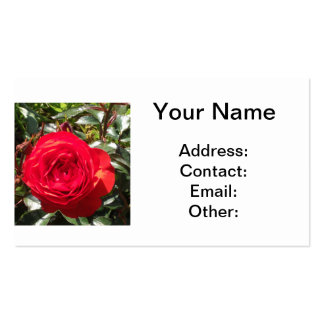 Dark Red Rose Double-Sided Standard Business Cards (Pack Of 100)