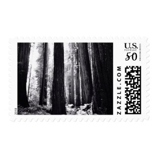 Dark Redwood Forest Postage