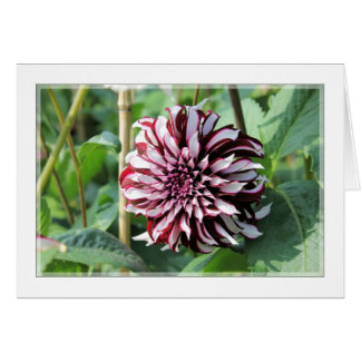 Dark scarlet brown magenta dahlia photo card