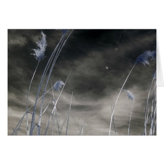 Dark sunny sky/Infrared Photography Card