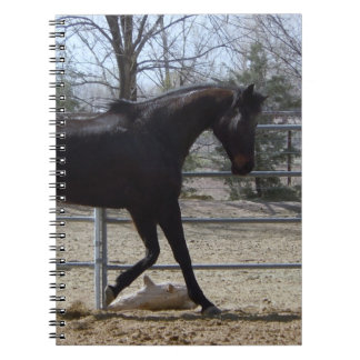 Dark Thoroughbred Horse Scene Journals