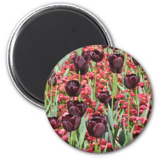Dark Tulip and Red Flowers Flower Carpet Magnet