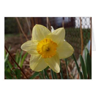 dark yellow daffodil card
