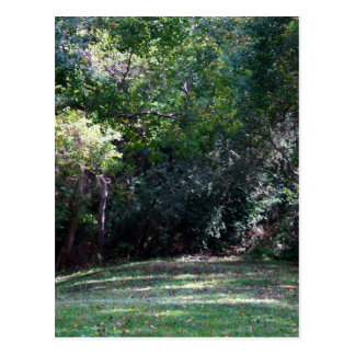 Darker green woods with grass path middle postcard