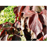 Darkred Colored Leaves Photo Sculpture