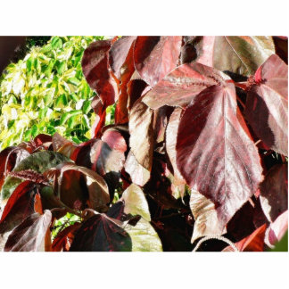 Darkred Colored Leaves Standing Photo Sculpture