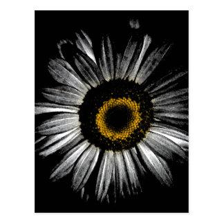 Darkroom Daisy Post Cards