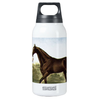 darley arabian SIGG thermo 0.3L insulated bottle