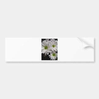 Darlin' Daisies Bumper Sticker
