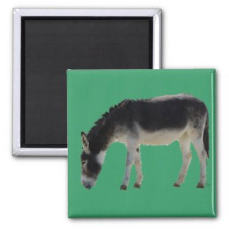 Darling Donkey on Green - Animal Lovers 2 Inch Square Magnet