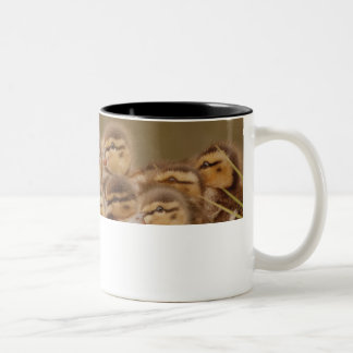 Darling Ducklings Two-Tone Coffee Mug
