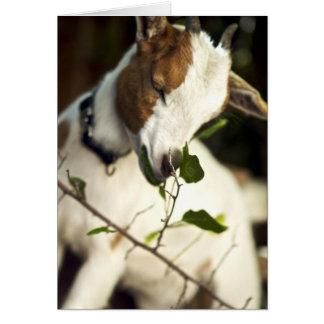 """Darling Goat in the Sun"" Card"