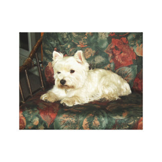 Darling Resting West Highland Terrier Print