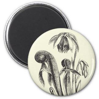 Darlingtonia californica, Carnivorous Plant 2 Inch Round Magnet