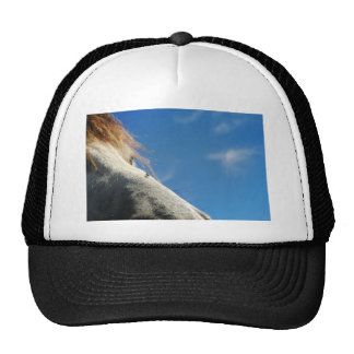 darn flies trucker hat