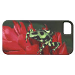 Dart frog 2 iPhone 5 cover