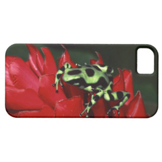 Dart frog 2 iPhone SE/5/5s case