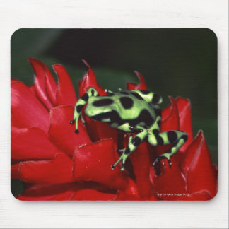 Dart frog 2 mouse pad