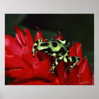 Dart frog 2 print