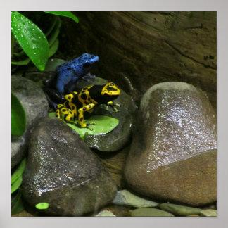 Dart Frog Buddies Print