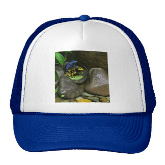 Dart Frog Buddies Trucker Hat