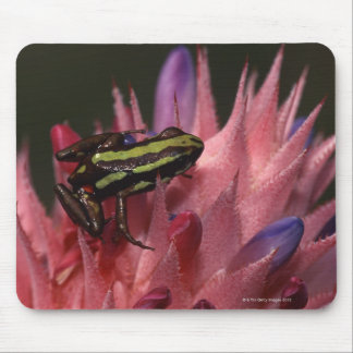 Dart frog mouse pad