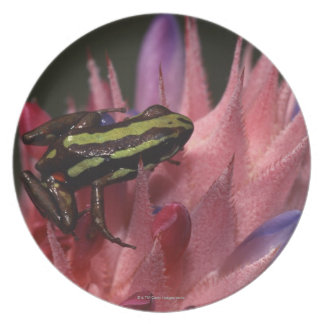 Dart frog party plates