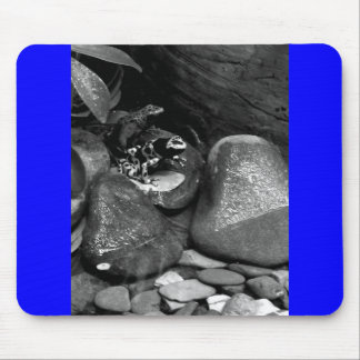Dart Frogs Sharing Rock B+W Mouse Pad